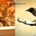 אתמול חשף אותנו בלוג הפטריה לקמפיין הוויראלי של דורקס, שהקימה את התנועה לשימור הבולבולים, שעשתה שימוש בציפור הלאומית להעברת המסר של מדוע חשוב […]