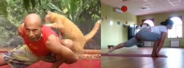 יוגה עם חתול