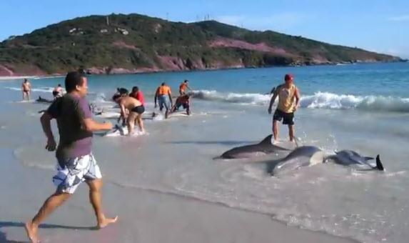 מצילים דולפינים בברזיל